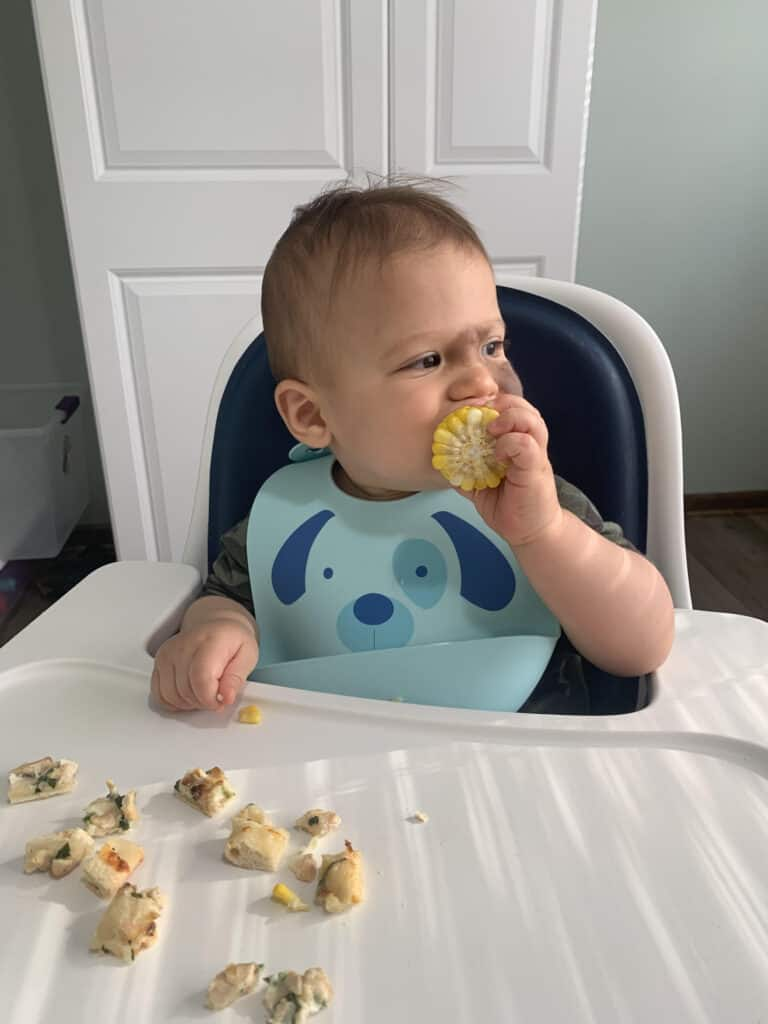 Baby holding and eating corn on the cob.