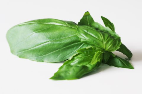 Basil leaves before they have been prepared for a baby starting solid foods