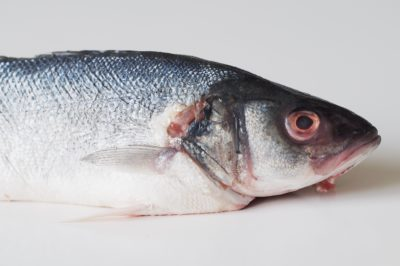 a whole branzino fish on a white table, before being prepared for a baby starting solid food