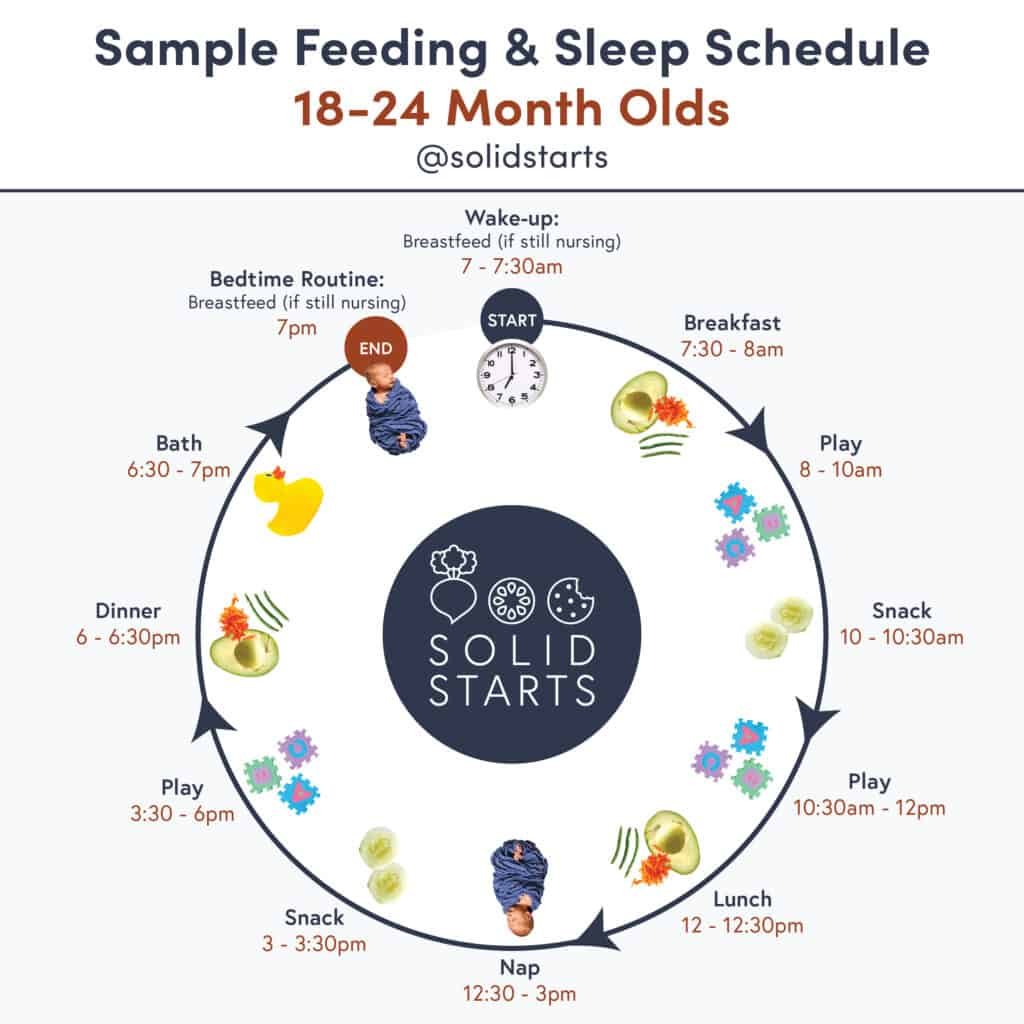 "An infographic entitled ""Sample Feeding & Sleep Schedule for 18 to 24 month olds"" showing wake time of 7am + nursing if still nursing, breakfast at 7:30am, play at 8am, snack at 10am, play at 10:30am, lunch at 12pm, nap at 12:30pm, snack at 3pm, play at 3:30pm, dinner at 6pm, bath at 6:30pm, bed routine + nursing if still nursing at 7pm."