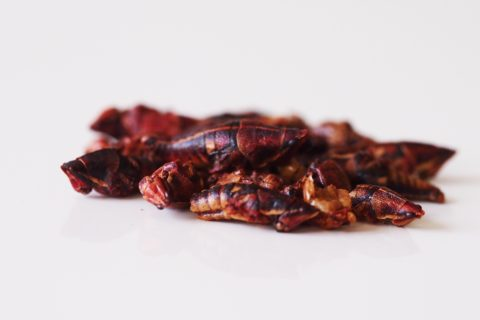 a pile of roasted grasshoppers before being prepared for babies starting solids