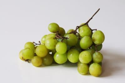 a bunch of green grapes before being prepared for babies starting solid food