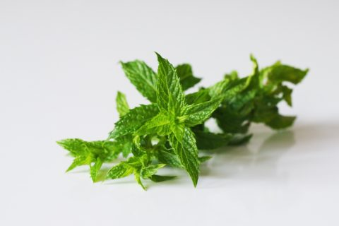 a sprig of fresh mint before being prepared for babies starting solid food