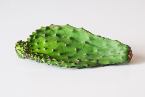 nopales, raw on a white table